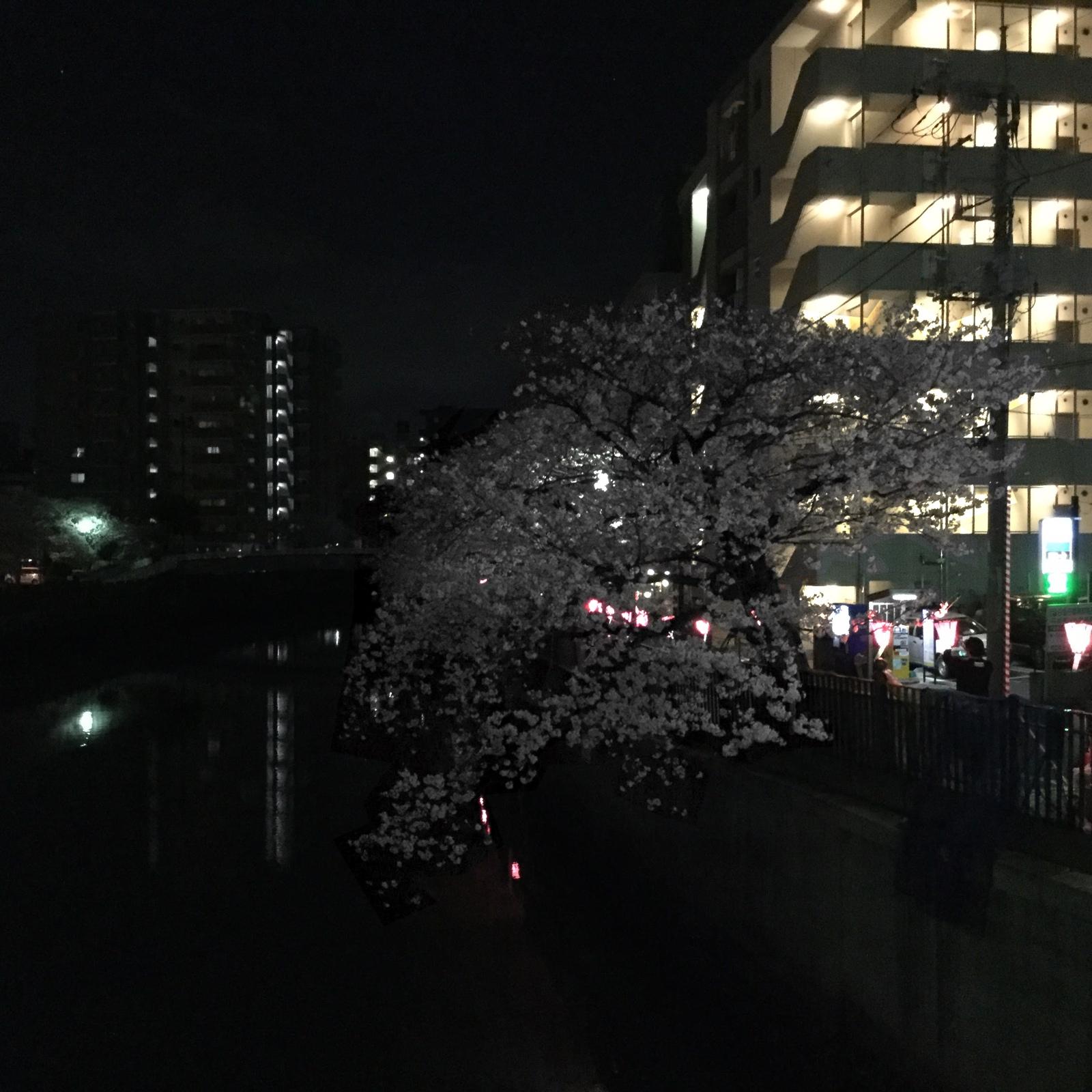 桜20160403−大岡川03a